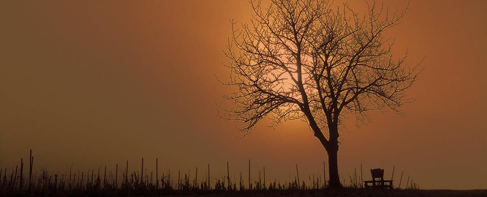 Baum_Nebel_2015_01_001
